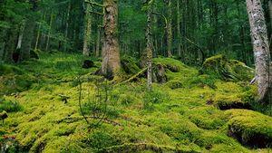 Magic forest - Beyond Matter Art