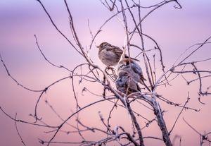 Arizona desert birds on tree branch
