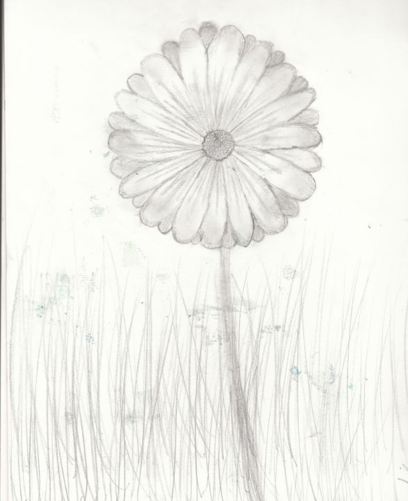 Daisy - Katie B ART
