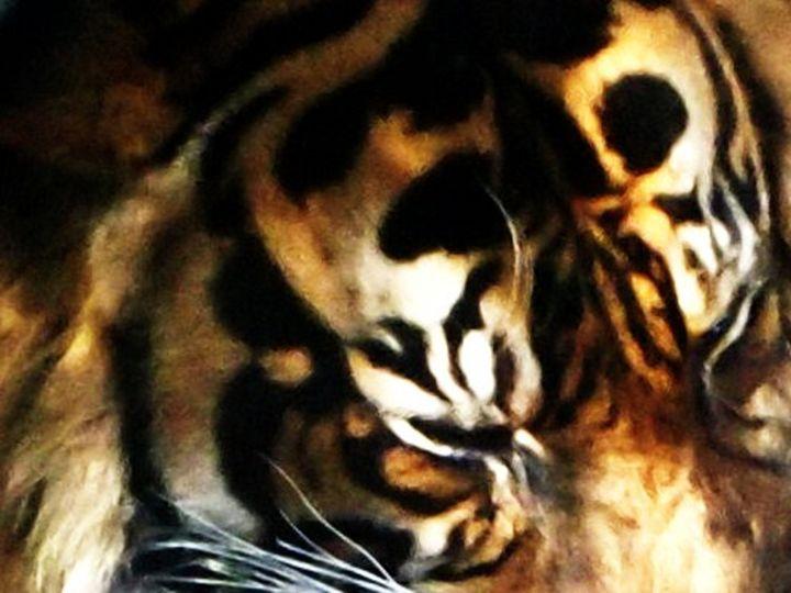 Tiger - ELDAFYRE