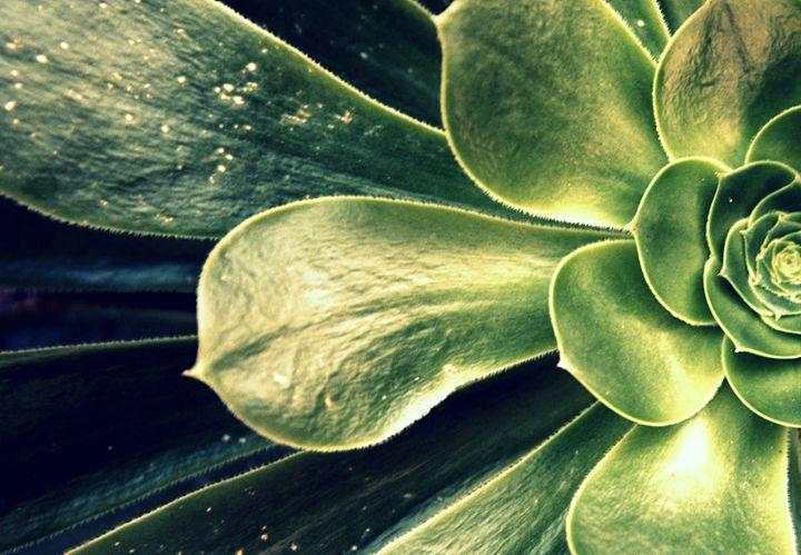 plant 2 - ELDAFYRE