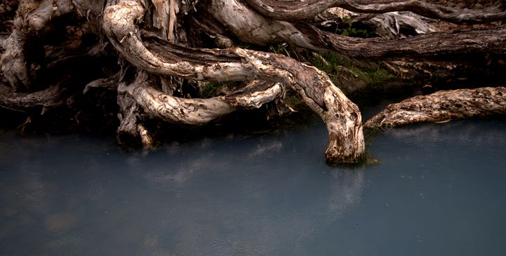 roots - ELDAFYRE