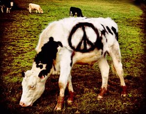 peace love and udderstanding