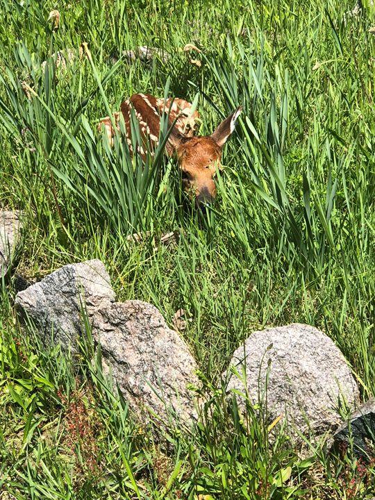 Baby deer - LunaLove