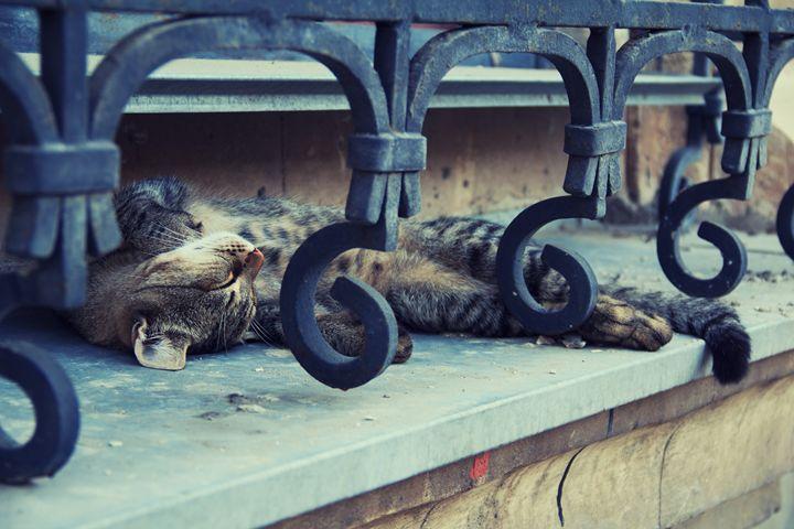 Cat sleeping on a windowsill. - Darya Lavinskaya