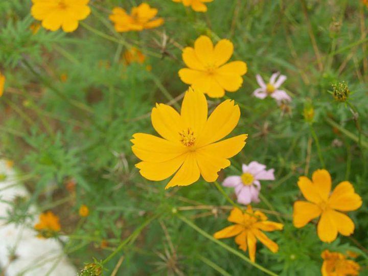 Yellow Flower - Ezlionel