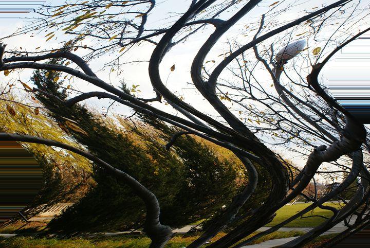 Fall - Gregory Patrick Lafferty