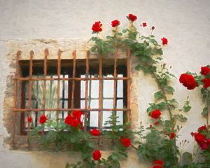 Red Roses Near Window
