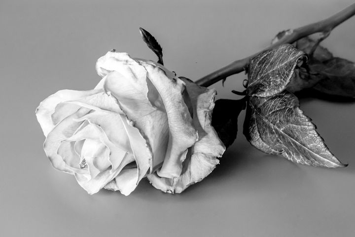 Rose in black and white - victor logan jr