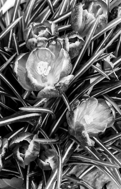 Not a Tulip - victor logan jr