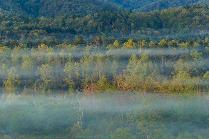 Foggy Forest Details - Mndphoto