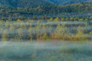 Foggy Forest Details
