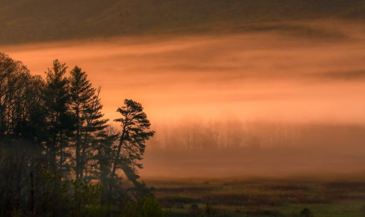 Foggy Forest Sunrise - Mndphoto