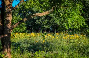 Summer Sunflower Oasis