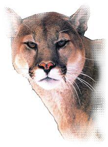 Cougar Edge - Animart