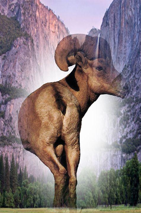Big Horn - Animart