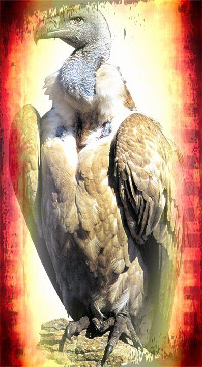 Cape Griffon Vulture - Animart