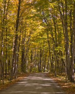 Canopy Covered Backroad