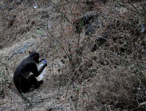 Monkey-See Monkey-Do