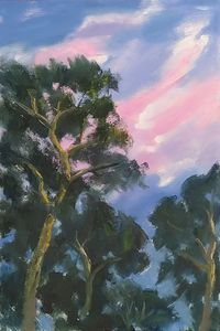 sunset on the canopy of trees