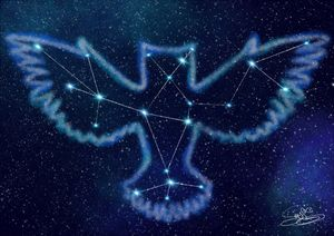 Owl's Constellation