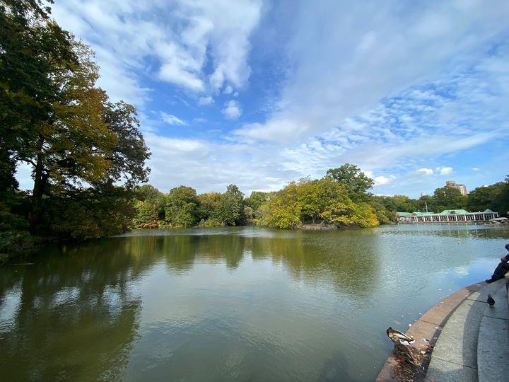 The Pond - Francisco Castro