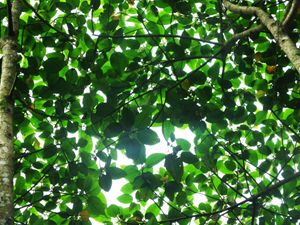 Light shining through the leaves