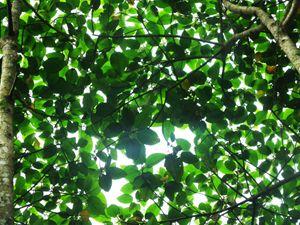 Light shining through the leaves