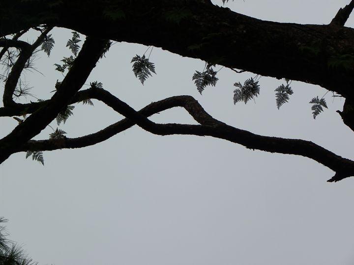 Lace on tree branches - Life!