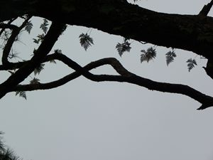Lace on tree branches