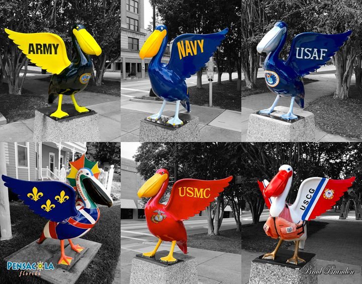 Pensacola Pelicans Military Collage - Pensacola Photography