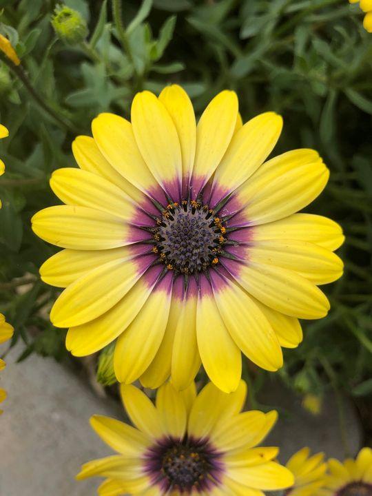 Kwiaty - L. Wieckowicz