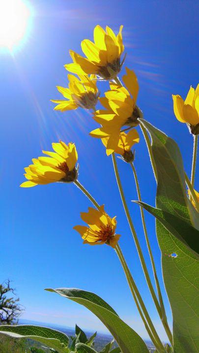 High sunshine - Delila Wysong