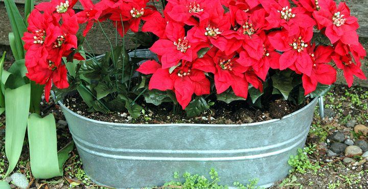Flower planter tub. - oscarcwilliams