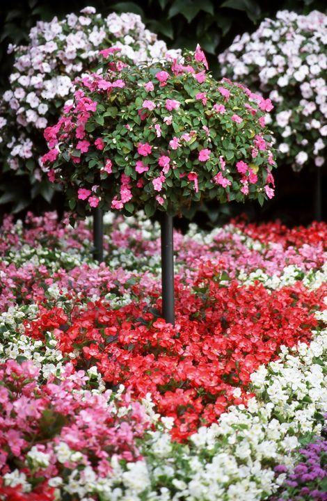 Valentine flowers. - oscarcwilliams
