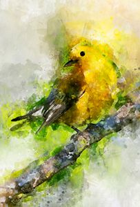 Prothonotary Warbler - Photography By Gordon Ripley