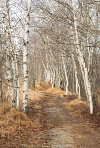 Jessup Path in winter