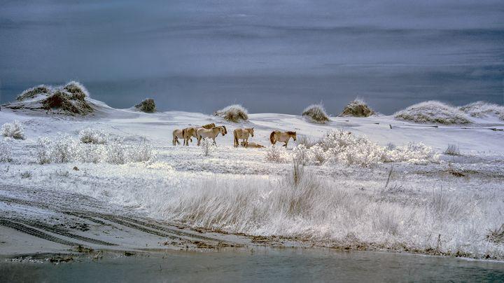 Wild Horses of Corrola - Photography By Gordon Ripley