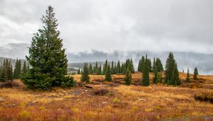 Rainy Day at Molas Pass