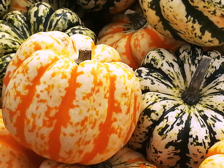 Multi-color pumpkins - Emotions - by Tasha Mayes Brookman
