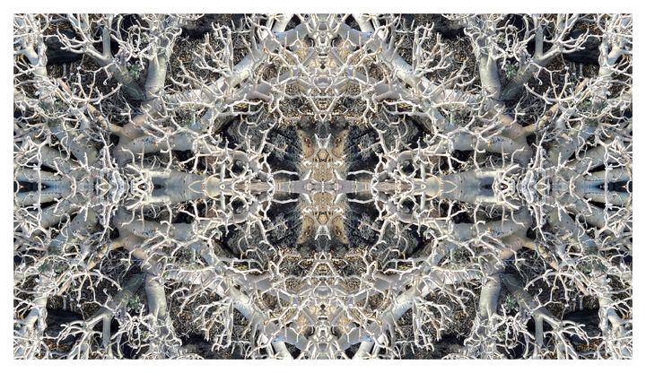 Beach Bones - Marialucia