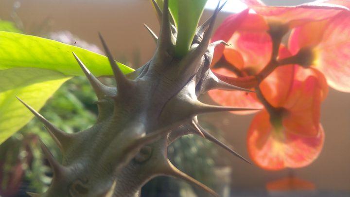 cactus branch -  24x7friendsandco
