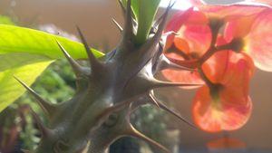 cactus branch