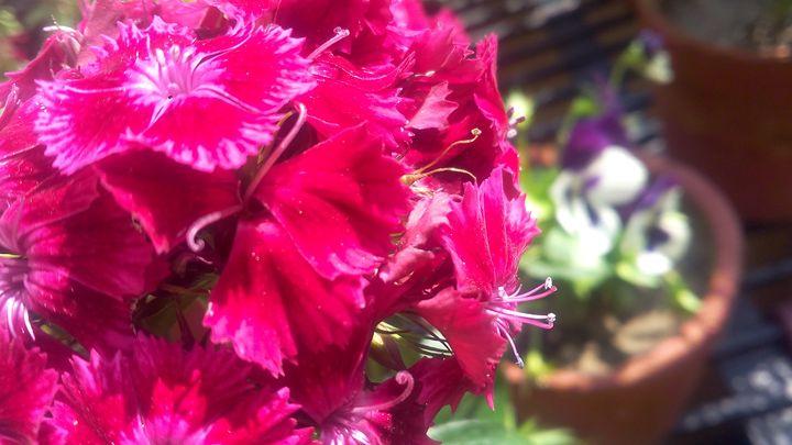 a red flower -  24x7friendsandco