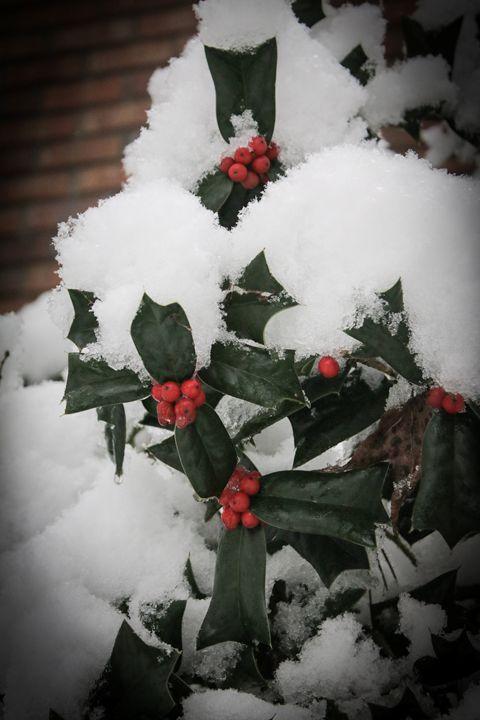 Winter's Berry - Niyon_Studio