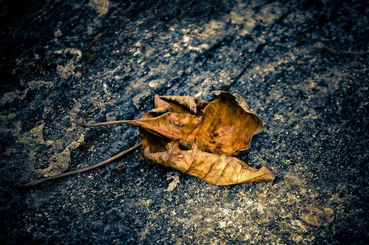 Fallen Leaves - Rohit Kamboj