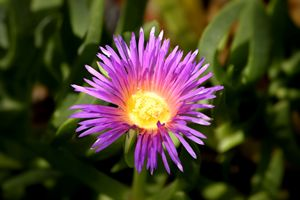 Glowing Purple Flower