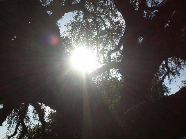 tree - marksart