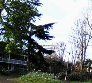 Portobello Green Ladbroke Grove