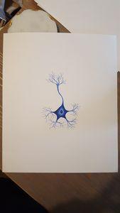 Nissl blue neuron